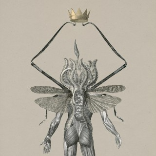 Tim Gravestock, 'The insect god'